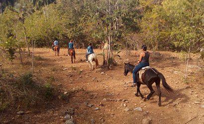 horse-tour-trinidad